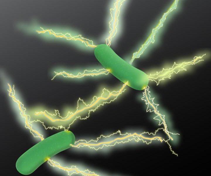 MicrobiologistsMakeBigLeapInDevelopingGreenElectronics