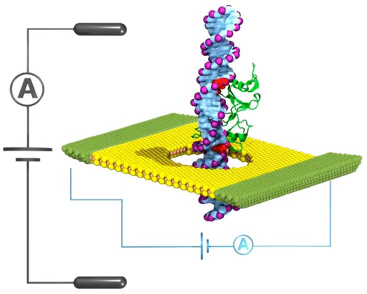 NanoporesMapSmallChangesInDNAForEarlyCancerDetection