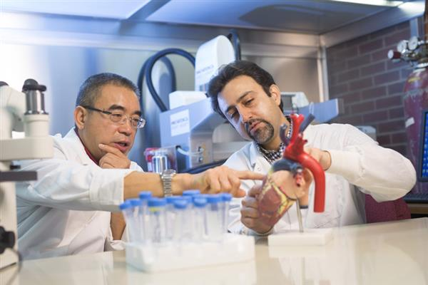 cCanadian-researchers-3d-bioprinted-stem-cell-patch-revolutionize-heart-disease-treatment-1