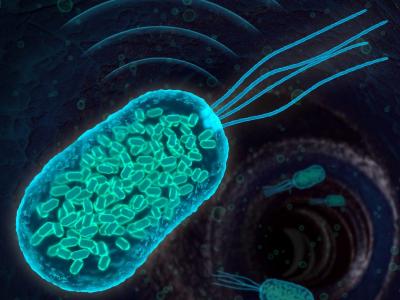 BacteriaEngineeredToHaveUltrasoundSignature