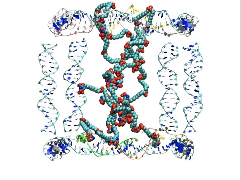 DNAStrandsDirectDesignOfNovelPolymerMaterials
