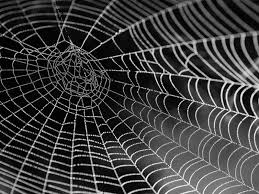 OutstrippingSpiderSilkWithCellulose