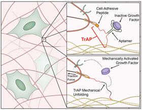MaterialsTriggerControlledActivationAndReleaseOfHealingProteins
