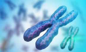 ResearchersCorrectGeneticMutationBehindLifeThreateningAutoimmuneSyndrome