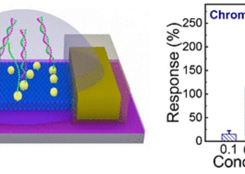 TransistorBasedDNASensorDetectsDownSyndromeNewNew