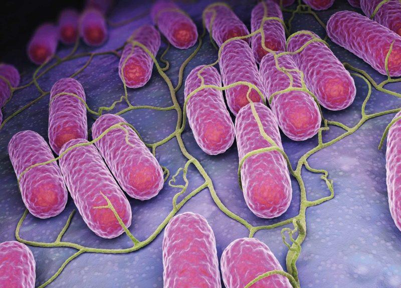 NanoparticlesHomeInOnInfectiousDiseases