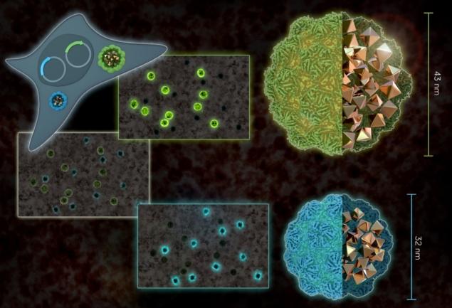 BacterialNanostructuresActAsElectronMicroscopeCompatibleGeneReporters