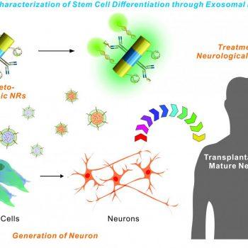 NewTechnologyCouldAidStemCellTransplantationResearch
