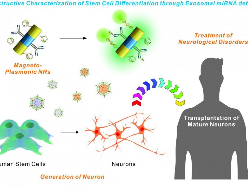 NewTechnologyCouldAidStemCellTransplantationResearch
