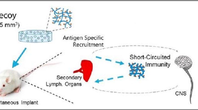 UsingDecoysToFightAutoimmuneDiseases