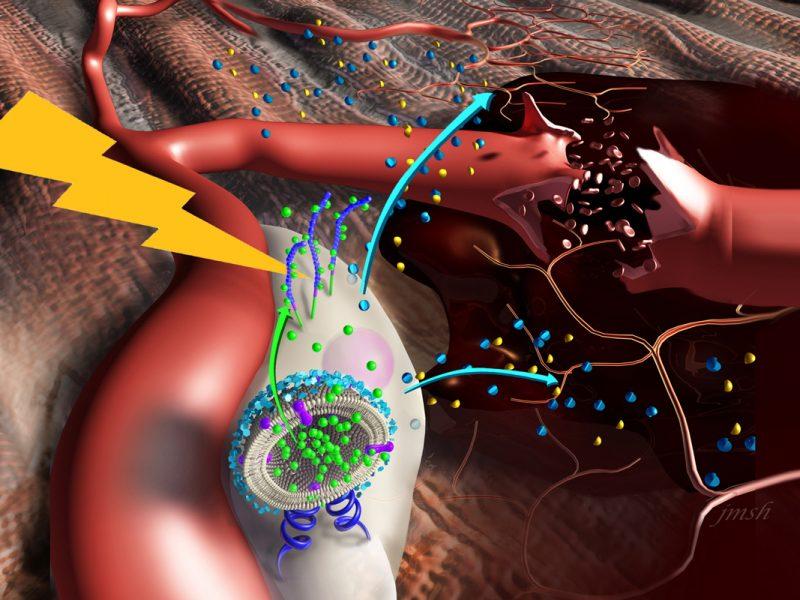 NanostimulatorsBoostStemCellsForMuscleRepair