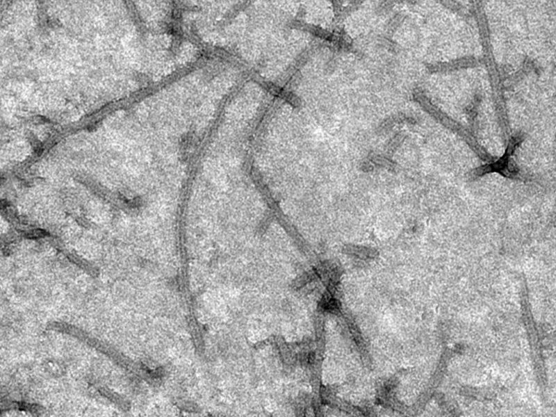 PlantVirusLikeParticlesAsVehiclesForTherapeuticAntibodies